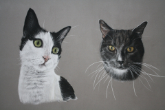 two-cats-pastel-pencil-drawing