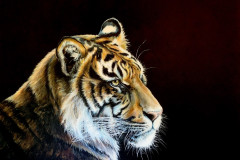Tiger-painting-with-black-backround