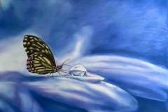 butterfly-and-waterdrop-on-blue-backround