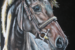 Acryl-painting-of-a-horse-in-sunshine