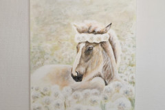 Foal-with-dandelions