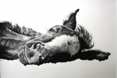 foal-pencil-drawing