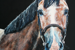 bay-young-horse-portrait-acryl-on-canvas