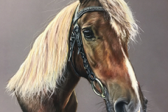 chestnut-New-Forest-pony-pastel-pencil-portrait-drawing