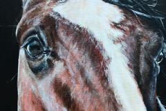 close-up-details-of-horses-eyes-acryl-painting