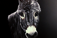 donkey-acryl-painting-on-canvas