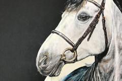 gray-sporthorse-acrylic-painting