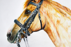 orange dressagehorse colored pencil drawing