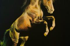solar-plexus-horse-art