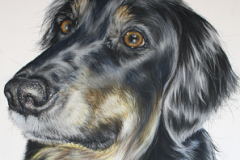 realistic black and tan hovawart portrait, drawing made by pastel pencils on pastelmat paper