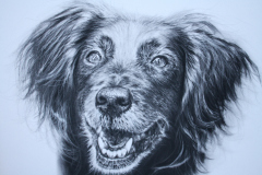 black and white realistic pencil drawing of a bird dog