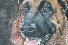 realistic acryl painting of german shepherd on black backround