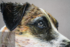 close up picture of pastel pencil drawing about a jackrussel terrier