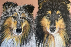 two-collies-portrait