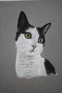 cat art gallery