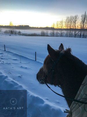 My Finnish horse on -27 celcius and a sunset!